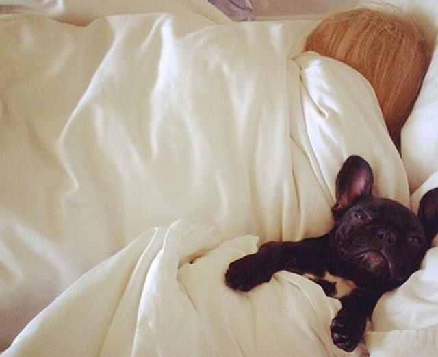 Celebrities falling in love with their French Bulldogs